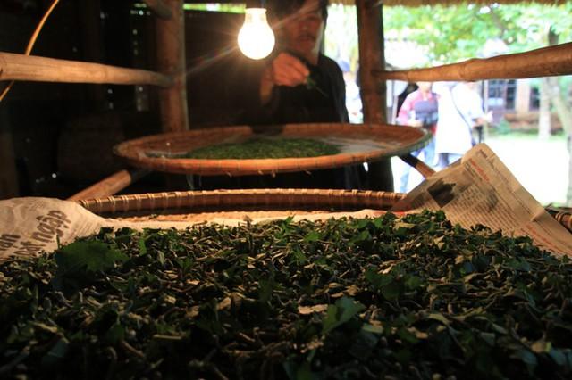 Làng lụa Hội An lưu giữ các nguồn gien quý về dâu tằm, giống tằm, tìm kiếm những gốc dâu cổ sót lại trên rừng chưa hề bị lai tạp với các loại giống dâu hiện đại. Đây là nơi trồng và lưu giữ giống dâu lá bầu truyền thống Quảng Nam