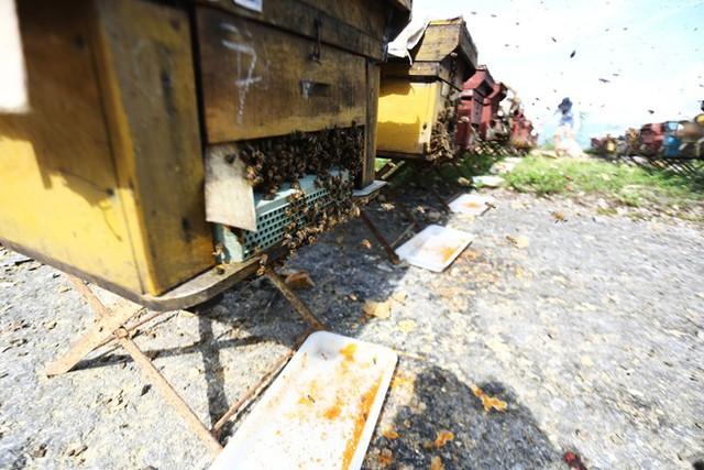 Nuôi ong nguy hiểm, thu tiền tỷ mỗi mùa ở Mộc Châu