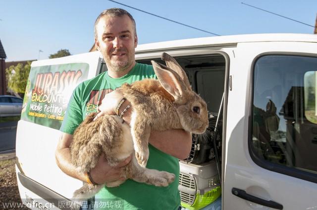 Jamie với con thỏ Anh khổng lồ Pringle