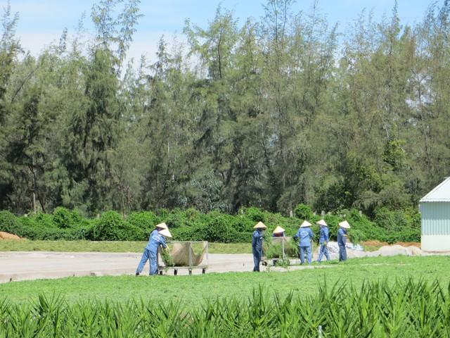 Qui trình thu hái, bảo tồn rau đắng đất