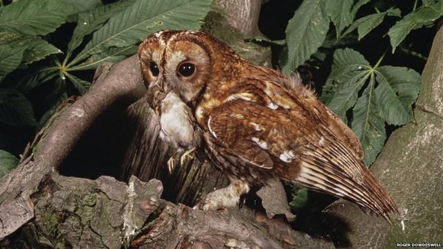 Khi Roger Dowdeswell giành được giải thưởng WPY đầu tiên, máy ảnh kỹ thuật số hàng ngày là một giấc mơ xa vờivà chỉ có một vài trăm người tham dự cuộc thi. WPY được tổ chức bởi Bảo tàng Lịch sử tự nhiên của Luân Đôn (NHM) và tạp chí động vật hoang dã của BBC.