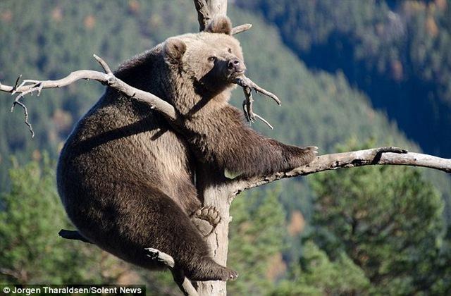 Vẻ mặt buồn bã của chú gấu.