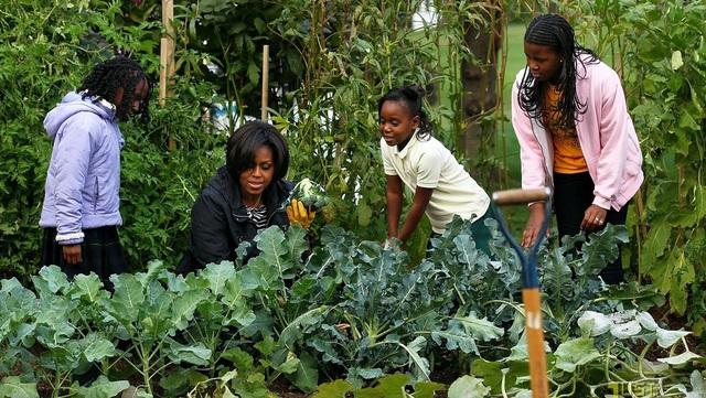 Đệ Nhất phu nhất Michelle Obama chăm sóc rất cẩn thận cho khu vườn, nó cung cấp rau sạch cho chính phòng bếp của Nhà Trắng.