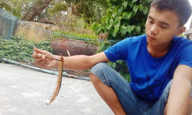 Người dân bắt sống con rết khủng dài hơn 25cm. Ảnh: Điền Quang.