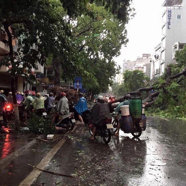 Cây đổ suýt gây chết người trên phố Huế. Ảnh: Minh Nhật