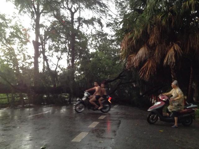 Khu Mai Động, Đền Lừ, cây đổ chồng chéo. Người dân phải quay về nhà vì không thể đi được bằng ô tô và xe máy. Ảnh: Hạnh Nguyên
