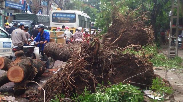 Cũng trên phố Minh Khai, 2 cây xà cừ bật gốc đổ xuống đường đè lên 1 chiếc xe máy (nhưng may mắn không có thiệt hại về người)