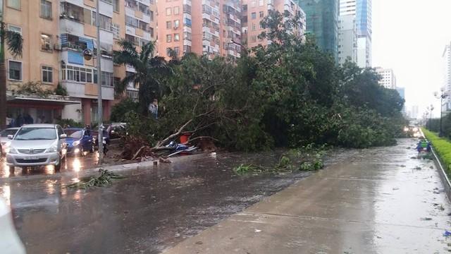 Sau trận mưa dông khá lớn vào khoảng 4 giờ 30 phút chiều nay, rất nhiều tuyến phố ở Hà Nội đã bị cây đổ đè lên phần đường lưu thông. Trong ảnh là tuyến đường Lê Văn Lương.