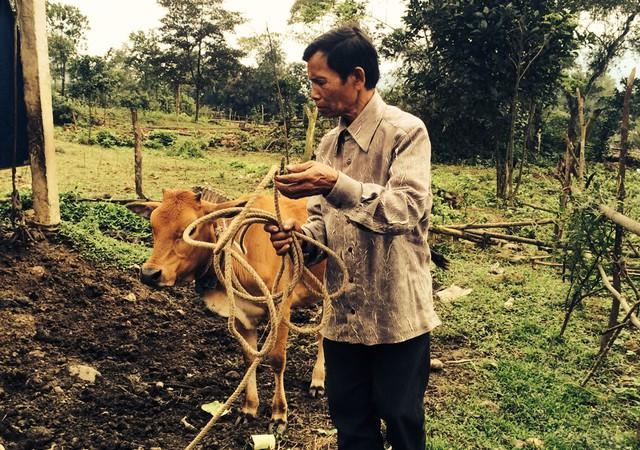 Anh Hồ A Nam và con bò được tặng