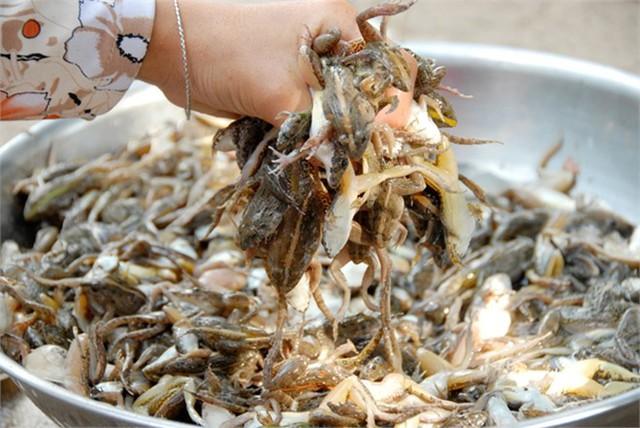 Sau khi lột da nhái xong, cần phải đem đi rửa nước sạch. Chị Nguyễn Thị Tươi, một người chuyên sản xuất khô nhái ở xã Vĩnh Trung, cho biết muốn cho khô nhái đạt chất lượng cao chị phải ướp nhái với tiêu, ớt, muối cho thấm đều trước khi phơi.... Đọc thêm tại: http://nongnghiep.vn/vu-nu-chan-dai-hot-bac-trong-mua-tet-post138460.html | NongNghiep.vn