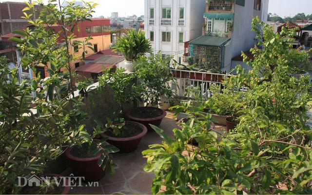 trông cây, sân thượng, Thủ đô, ban công