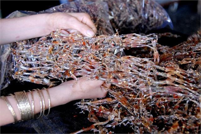 Hiện nay, tại ấp Vĩnh Hạ, xã Vịnh Trung, huyện Tịnh Biên có khoảng 50 người sống bằng nghề soi nhái để cung cấp nhái thịt cho 5 cơ sở sản xuất khô. Chị Trần Thị Mai Xuân phấn khởi cho biết vào mùa mưa, nhái xuất hiện nhiều mỗi ngày gia đình chị làm được 15kg nhái khô. Còn mùa nắng chỉ khoảng 4 - 5kg, không đủ hàng để giao.... Đọc thêm tại: http://nongnghiep.vn/vu-nu-chan-dai-hot-bac-trong-mua-tet-post138460.html | NongNghiep.vn