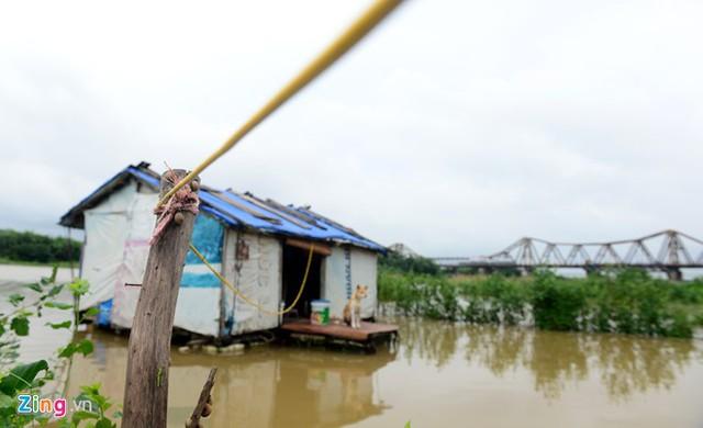 Bãi giữa sông Hồng ngập trắng, xóm nổi dạt vào bờ
