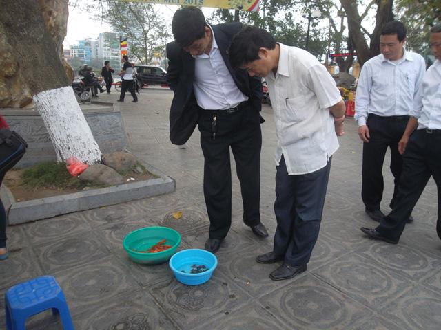 Nhiều người mua ba ba, cá để phóng sinh.