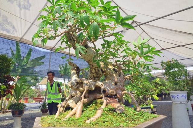 Một tác phẩm Bonsai được trưng bày tại Hội hoa Xuân TPHCM năm 2015