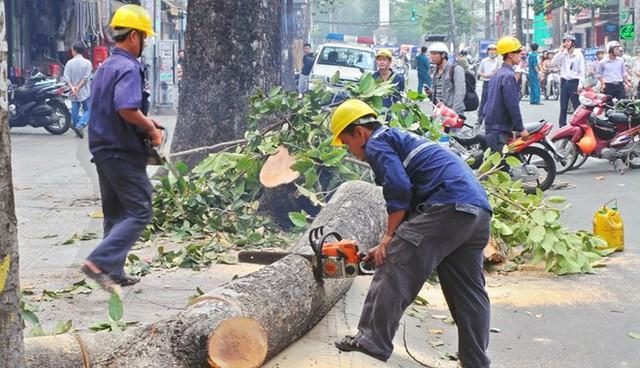 Nhiều cán bộ cấp Sở sẽ bị kiểm điểm trong vụ chặt cây xanh. (ảnh minh họa)