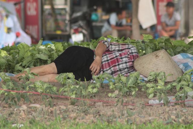 Nghỉ trưa trong bãi cỏ trên đường Nguyễn Xiển.