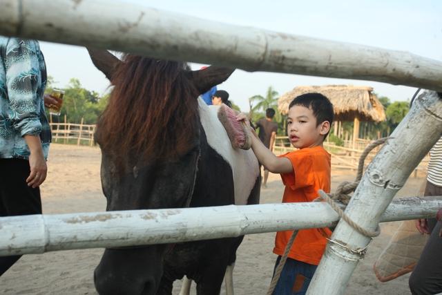 Bài học đầu tiên cho các bé là chăm sóc và làm quen với ngựa.