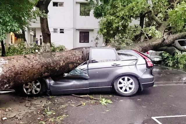 Thiệt hại về người, cây, xe cộ, tài sản… sau vụ dông tố ập đến bất ngờ ngày 13/6 tại Hà Nội quá lớn. Ảnh: ĐKLV