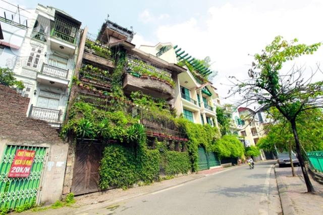 Giàn dây leo trồng hướng có nắng có tác dụng rất tốt để làm mát nhà. Ảnh: T.L