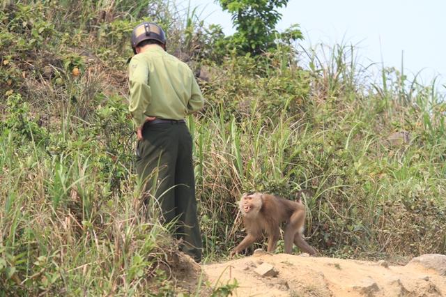 Con khỉ này rất hung dữ...