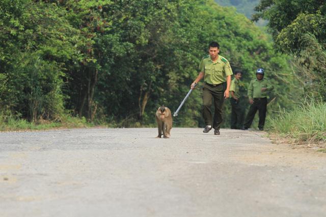 Con khỉ này rất khôn, tìm cách lẩn trốn...