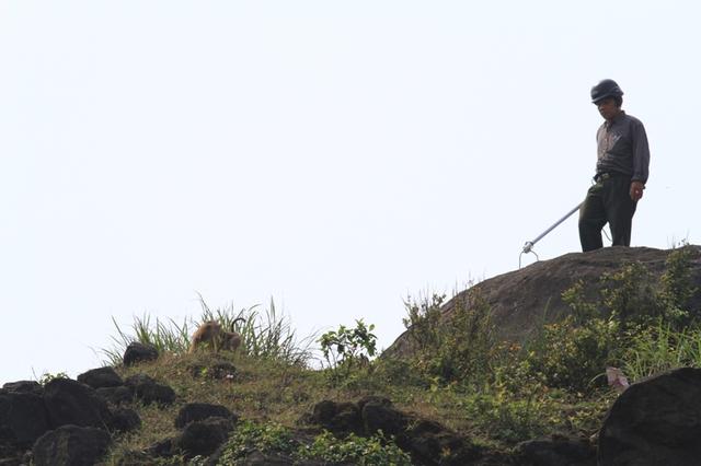 ...và con khỉ này rất khôn. Nó chạy trên đỉnh rồi xuống đường, rồi lại chạy lên đỉnh Bàn Cờ, khiến công việc bắt giữ rất khó khăn.