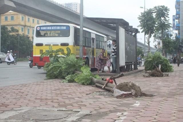 Cây xanh bật gốc đổ la liệt quanh bến xe bus (trên đường Nguyễn Trãi, quận Thanh Xuân)
