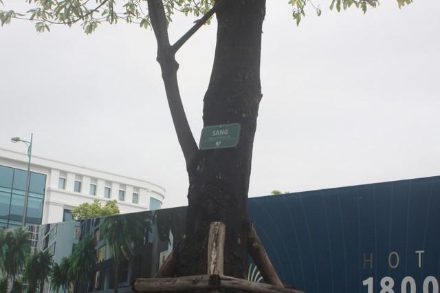 Sấu, Bằng Lăng, Sang...những loại cây được một số khu đô thị cao cấp lựa chọn trong việc quy hoạch đô thị.