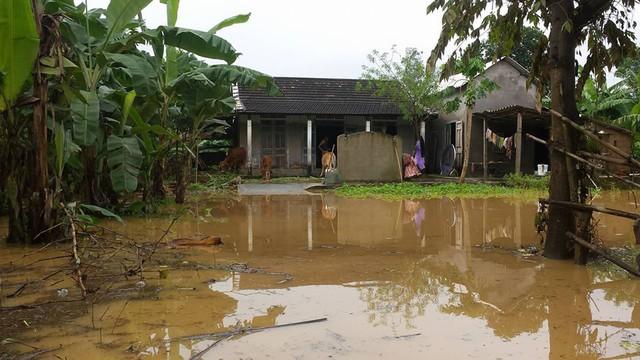 Gia súc lên sân nhà để trốn lụt...