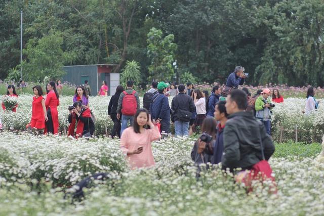 Tại các vườn hoa ở khu vực phường Nhật Tân (quận Tây Hồ) những ngày này luôn nhộn nhịp người đến chụp ảnh cùng cúc họa mi.