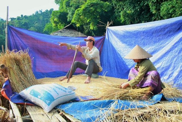 Người dân trong bản đang thu hoạch lúa. Ảnh: Đ.T