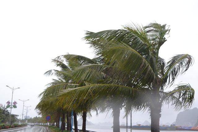 Gió giật mạnh tại TP Hạ Long