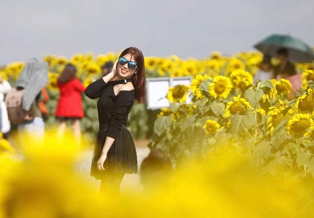 Do hoa hướng dương có vòng đời ngắn ngủi, chỉ khoe sắc trong khoảng 2 - 3 tuần nên ai cũng muốn ghi lại những khoảnh khắc cho mình bên đồi hoa mặt trời lớn nhất Việt Nam này.