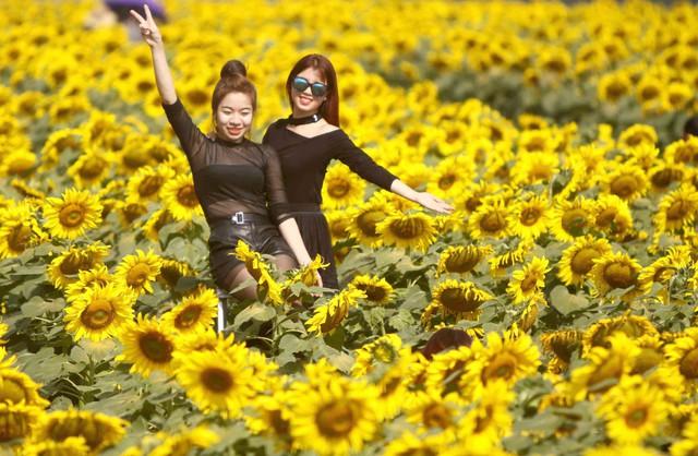 Hàng triệu bông hoa luôn hướng về phía mặt trời này đã bất ngờ biến nơi núi rừng heo hút thành điểm đến thú vị của những người trẻ.