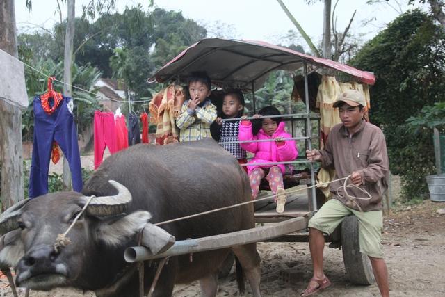 Đạp xe đưa 2 con gái đến trường nhưng nhiều lần bị ngã vì đường trơn trượt, anh Văn Đình Ngọc (34 tuổi, trú xóm Chùa, xã Thanh Khai, huyện Thanh Chương, Nghệ An) quyết định nâng cấp chiếc xe trâu kéo của gia đình để đưa đón con gái đi học.