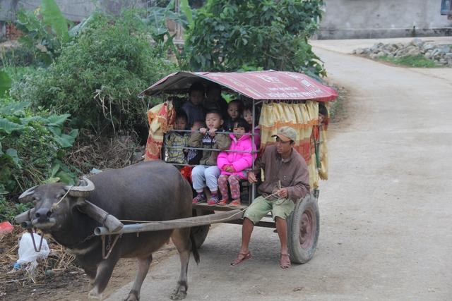 Buổi sáng bắt đầu từ khoảng 6h10, anh Ngọc dậy cho trâu ăn, chuẩn bị xe để đúng 6h30 bắt đầu đưa 2 đứa con cùng 2 đứa cháu đến trường để đi học.