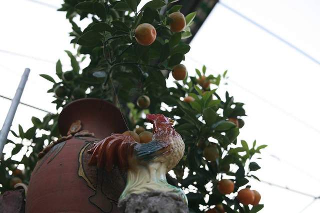Muốn có một cây quất bonsai dáng gà, tôi đã phải mất công về tận Bắc Ninh nghiên cứu giống gà Hồ, vẽ phác thảo xong đặt hàng ở lò gốm. Tiếp theo phải trồng quất, tạo dáng sao cho ưng ý nhất. Việc định giá của người mua này phụ thuộc và nhiều yếu tố như thế cây, tuổi đời, lộc, hoa và số quả. Giá một cây quất bonsai dáng gà Hồ từ 2,5 – 5 triệu đồng/cây, ông Mạnh nói.