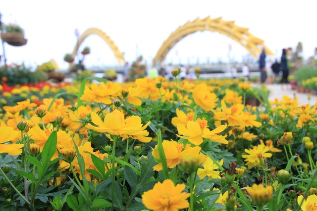 Trăm hoa khoe sắc rực rỡ bên sông Hàn