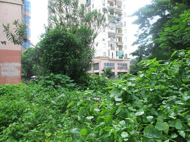 Một khu chung cư nhà ở tại phường Định Công (Hoàng Mai), ô đất ngay dưới dân được tận dụng trồng rau và đang rất rậm rạp, những môi trường này cũng có thể là cơ hội cho muỗi gây bệnh cư ngụ.