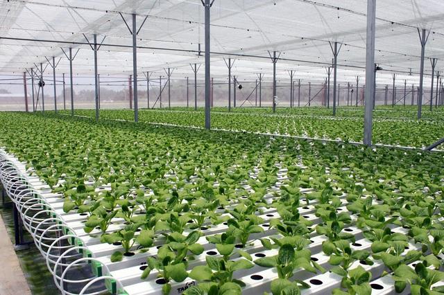 Nông trường Tam Đảo - một trong 14 nông trường đã và đang chuẩn bị đưa vào canh tác của Công ty VinEco.