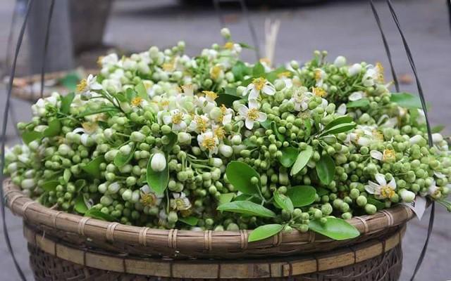 Gánh hoa bưởi rong trên đường phố Hà Nội. Ảnh: H.Phương