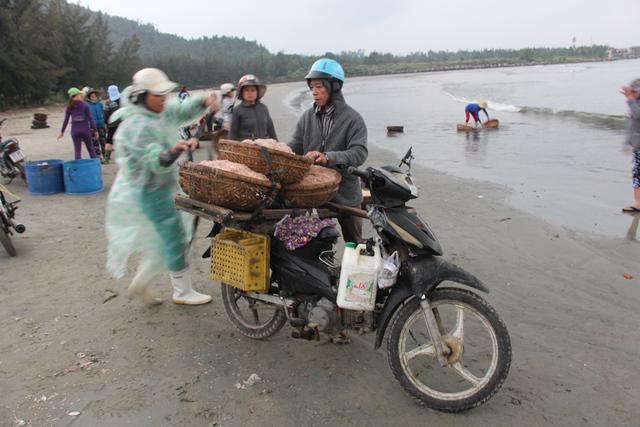 ...ruốc tươi từ bờ biển Đà Nẵng được đưa đi khắp nơi.