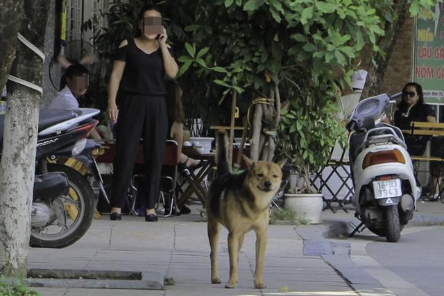 Chó không rọ mõm vẫn thản nhiên trên đường. Ảnh: Cao Tuân
