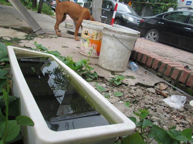 Máng, thùng chứa nước giữa khu đất được người dân tận dụng trồng rau...