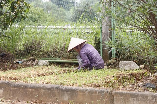 Người dân tự ý cải tạo phần đất được sử dụng để trồng cây xanh ven đường.
