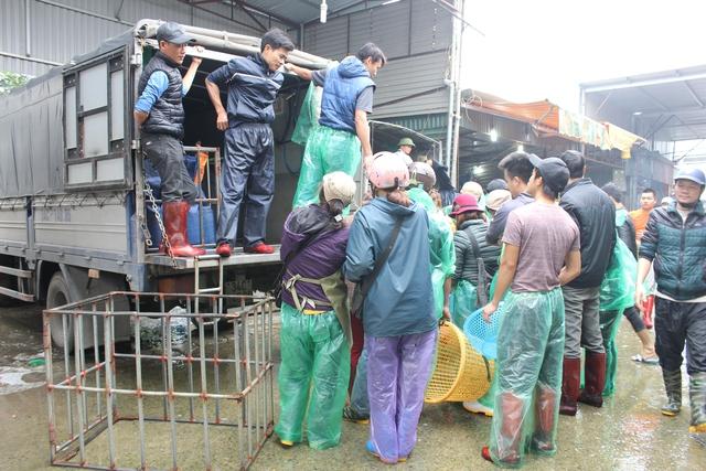 Hàng chục xe tải lớn nhỏ đổ về chợ. Mỗi ngày, lượng cá tiêu thụ của mỗi hộ kinh doanh khoảng 8-9 tạ.