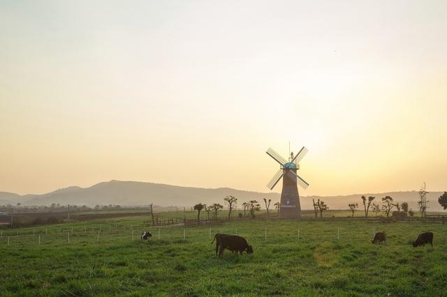 500 cô bò được chăn thả tự do trên trang trại 76.2 hecta.