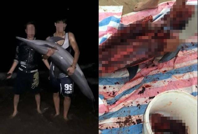 Cộng đồng mạng bày tỏ sự bất bình về hành động xẻ thịt cá heo của người dân. Ảnh: TL