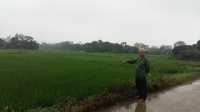 Người dân lo lắng cánh đồng lúa rộng lớn sẽ bị thu hồi để bán đấu giá. Ảnh: Đỗ Lực